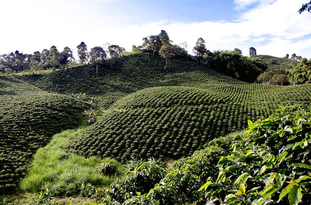 Los productores de café hacen un llamamiento a Nestlé, JAB y Starbucks