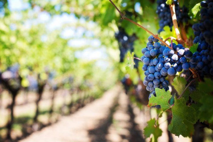 Nuevas soluciones de embalaje sostenible en el sector vitivinícola